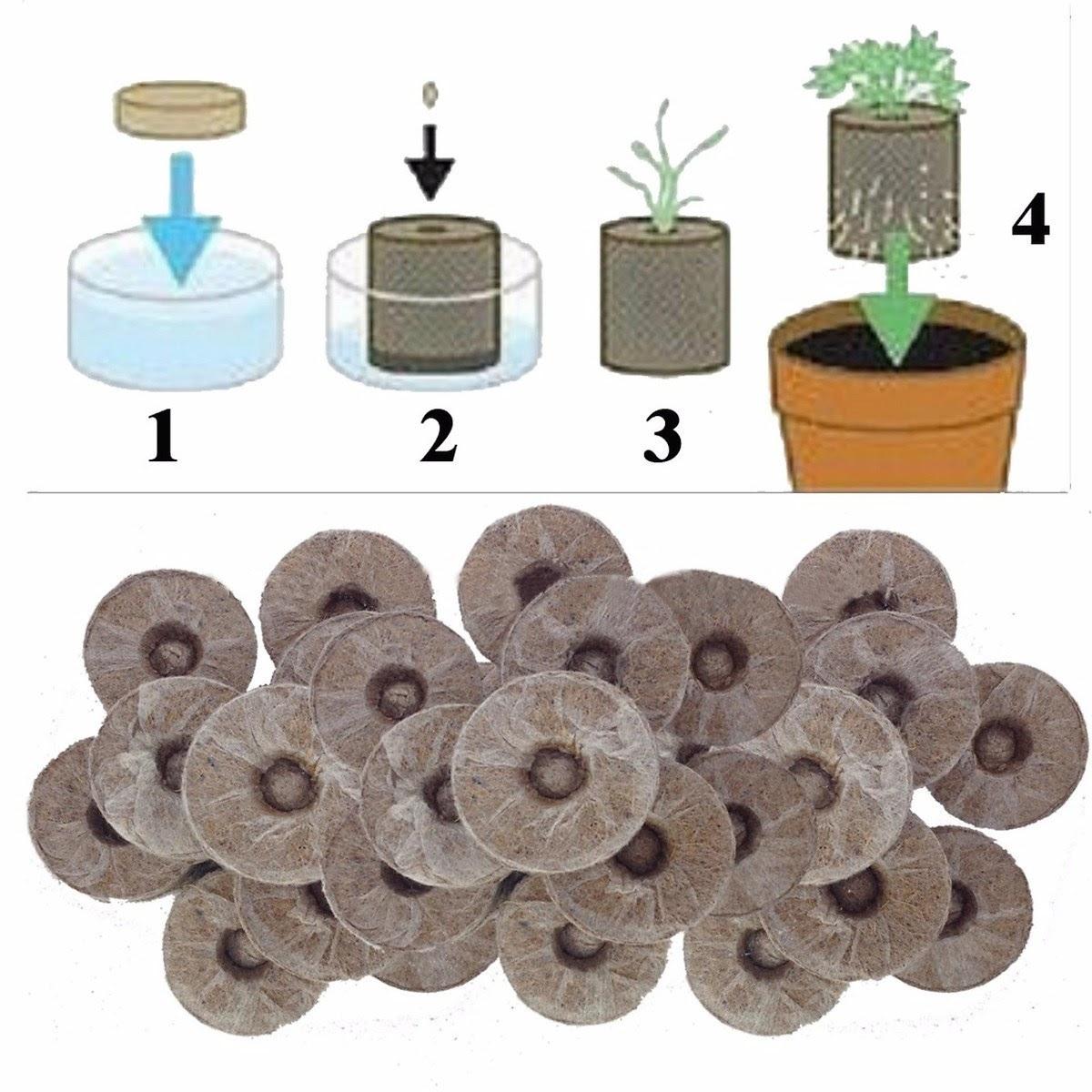 Quy trình sử dụng viên nén ươm cây từ xơ dừa