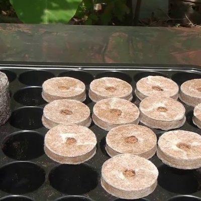 Sử dụng viên nén làm từ mụn xơ dừa mang lại hiệu quả cao trong sản xuất