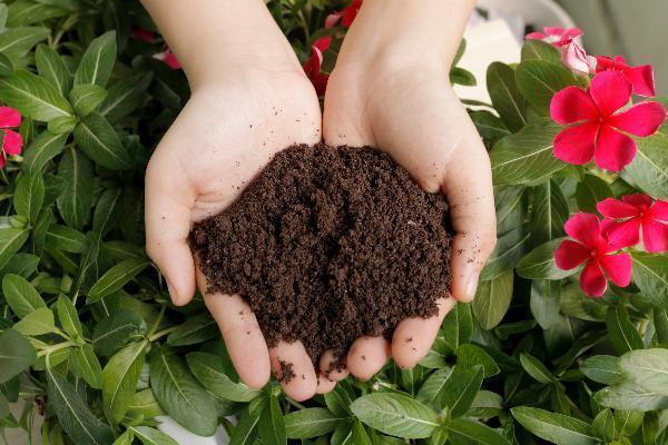 Phân trùn quế SFARM phù hợp với hầu hết các loại cây trồng