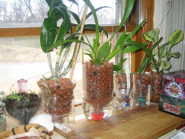 Viên đất nung được sử dụng làm giá thể trồng lan