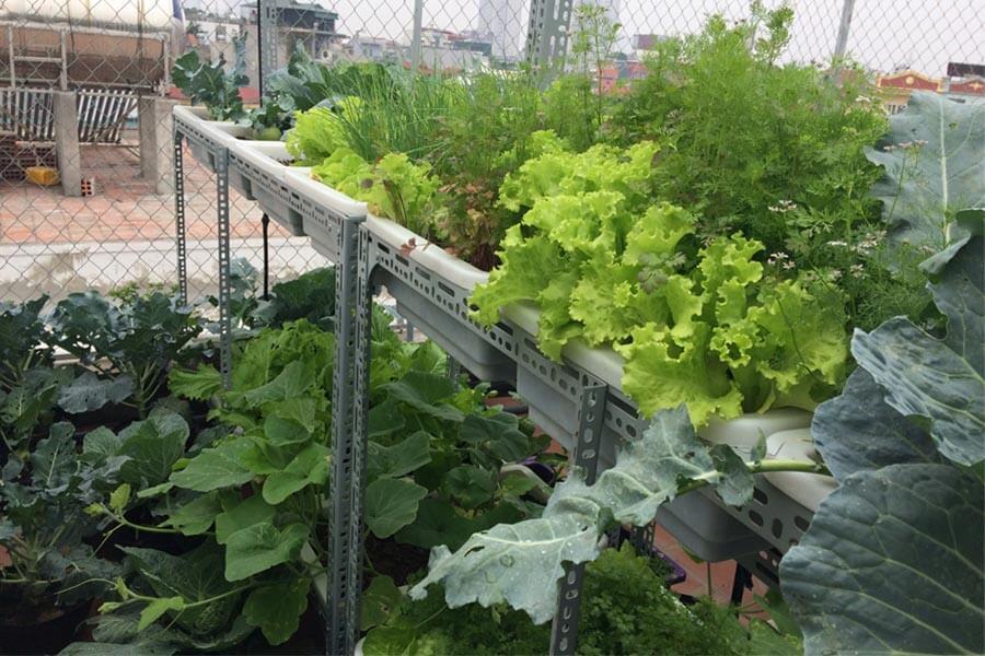 Banner-dich-vu-trong-rau sach-My-Garden-0916818526