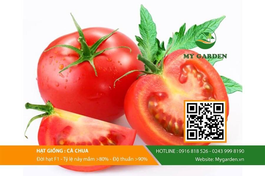 Hướng dẫn cách gieo hạt cà chua đúng kỹ thuật tại nhà