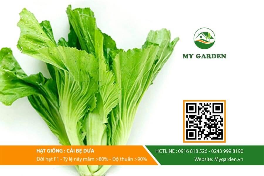 Giới thiệu về hạt giống cải bẹ dưa
