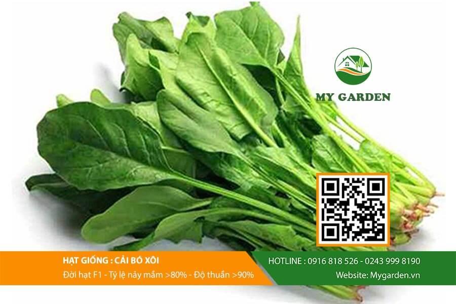 Hat-giong-Cai-bo-xoi-My-Garden-hinh-4