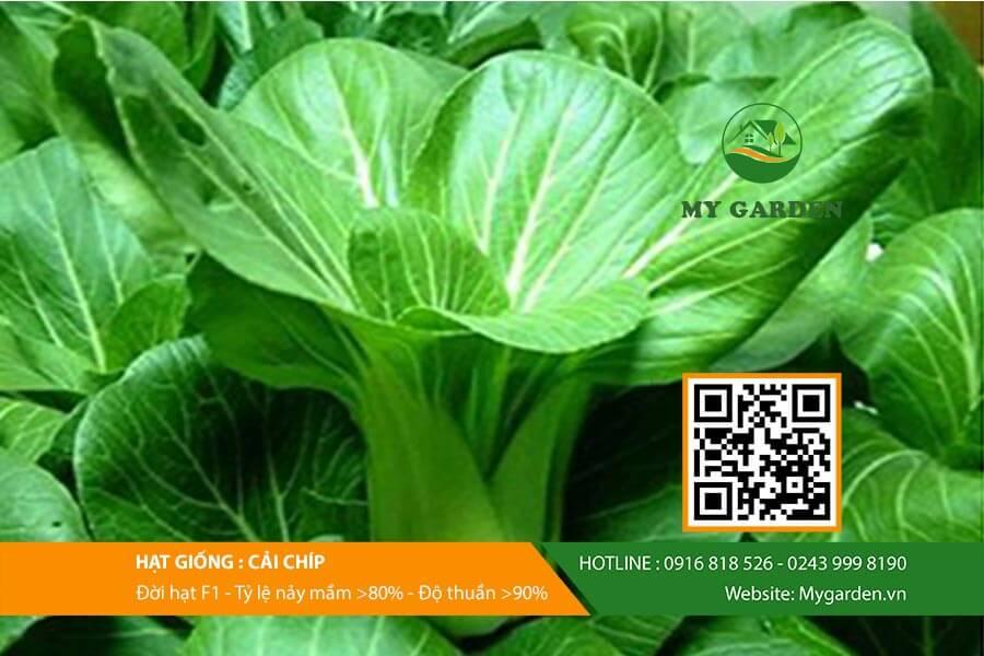 Hạt giống cải chíp F1 Việt Nam gói 20 gram