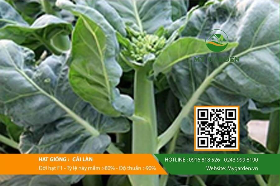 Gieo trồng đúng cách giúp rau phát triển nhanh