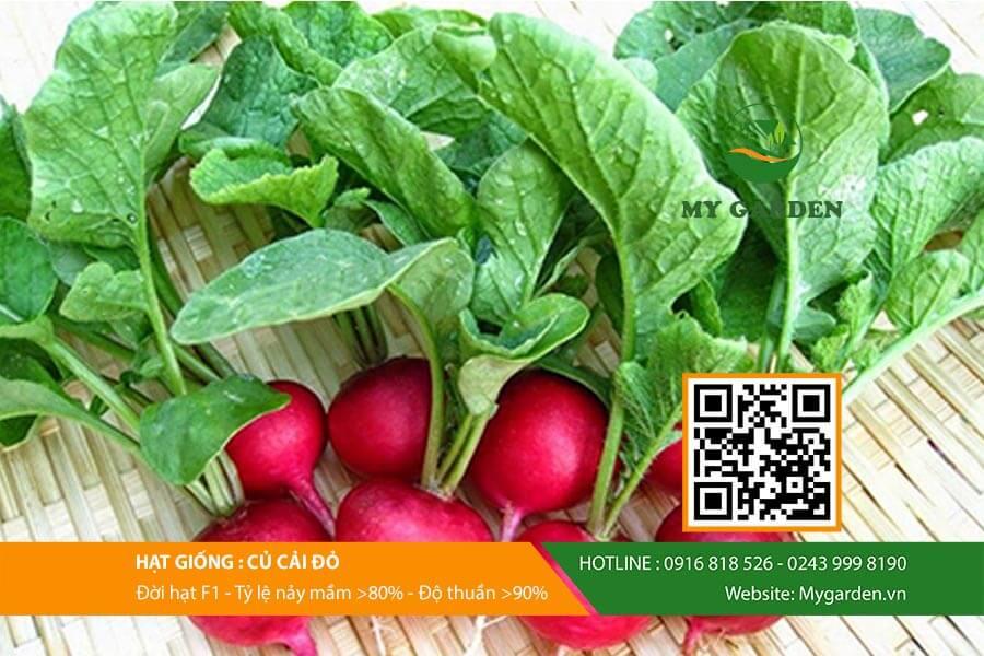 Củ cải đỏ chứa nhiều chất dinh dưỡng tốt cho sức khỏe người dùng