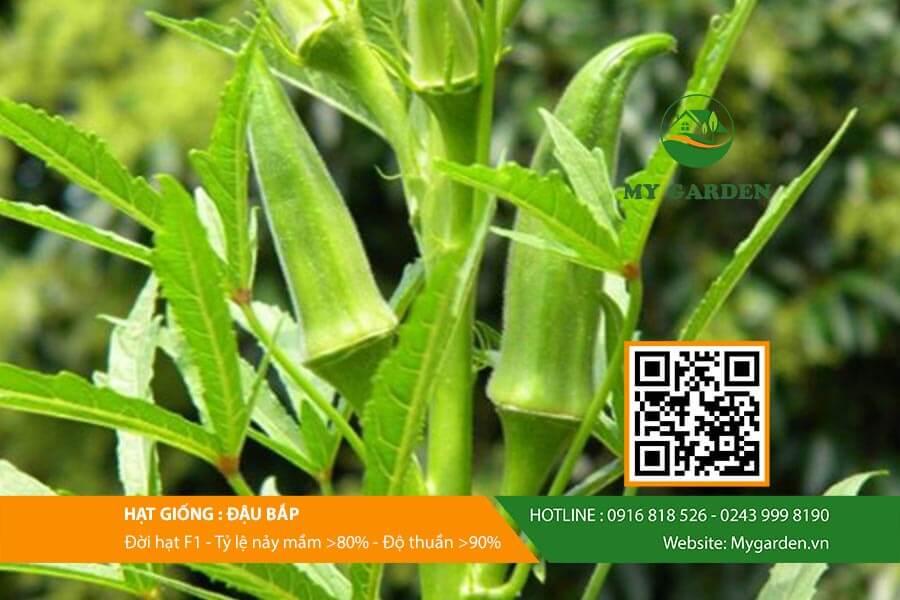 Tìm hiểu về hạt giống đậu bắp