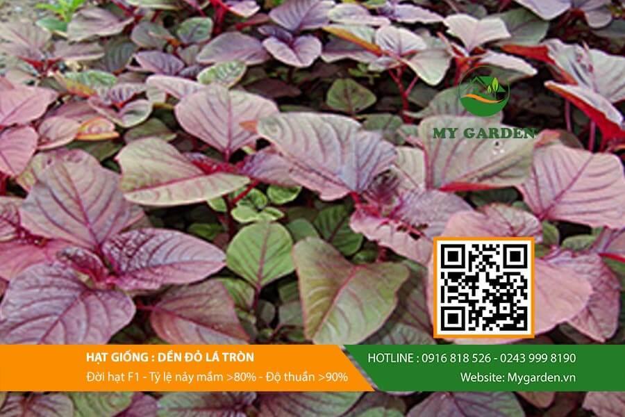 Hat-giong-Den-do-la-tron-My-Garden-hinh-2