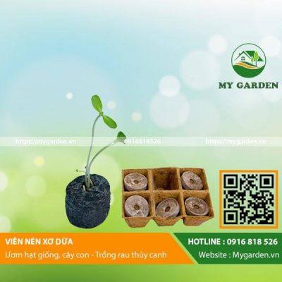 Vien-nen-xo-dua-mygarden-0916818526-hinh-1