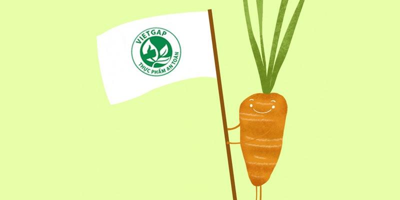 Những tiêu chí về tiêu chuẩn trồng rau VietGAP