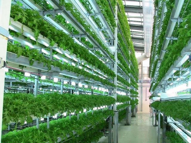 Một hệ thống sử dụng đèn led trồng rau tại Việt Nam