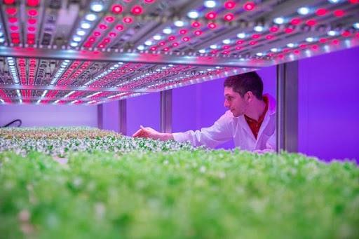Điều chỉnh chiều cao từ đèn Led đến cây trồng