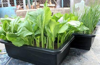 cách sử dụng chậu trồng rau thông minh