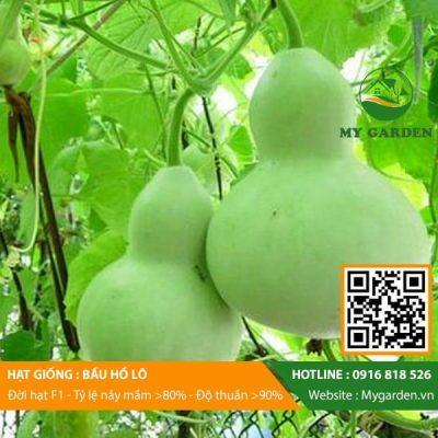 Hat-giong-Bau-ho-lo-mygarden-0916818526-hinh-1