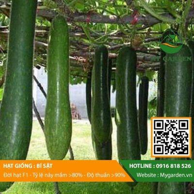 Hat-giong-bi-sat-mygarden-0916818526-hinh-2