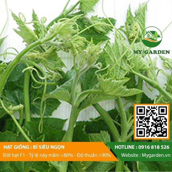Hat-giong-Bi-sieu-ngon-My-Garden-hinh-22