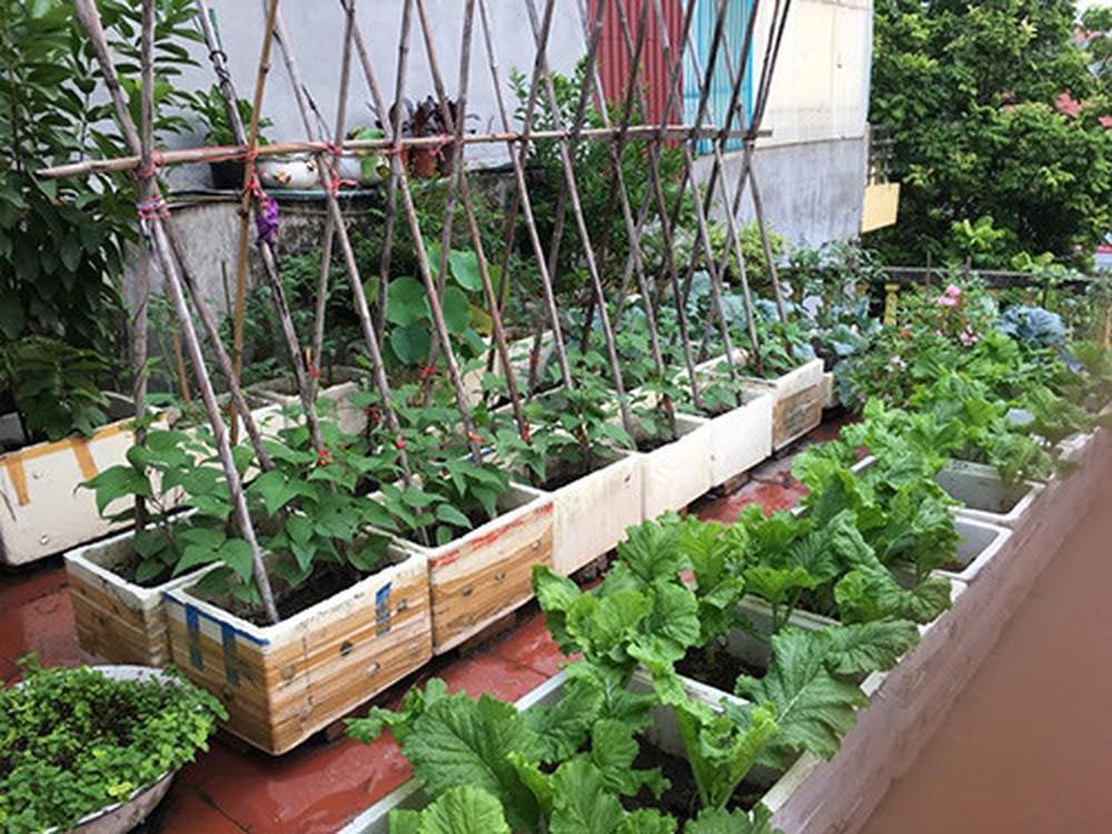 Các phương pháp trồng rau sạch bằng thùng xốp