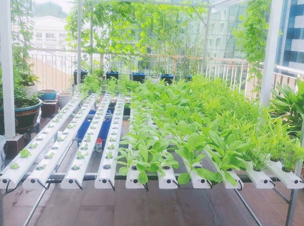 Các phương pháp trồng rau sạch thủy canh
