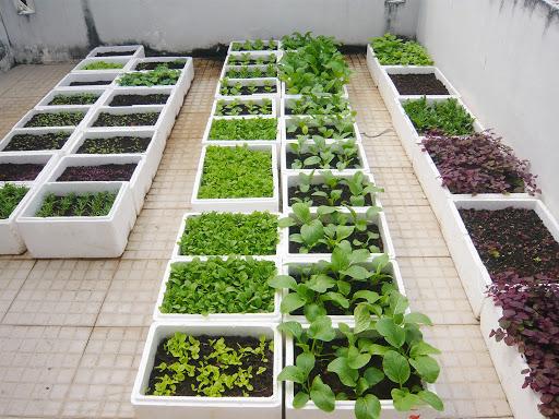 Các phương pháp trồng rau sạch được áp dụng nhiều