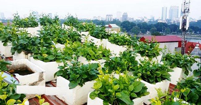 Quy trình trồng rau sạch của nhật bản