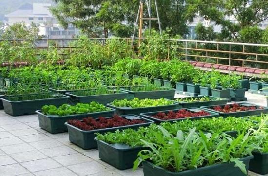 Phương pháp trồng rau sạch hiệu quả
