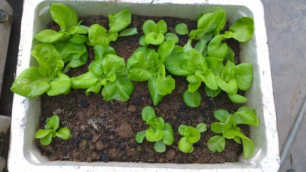 Cách cải tạo đất trồng rau sạch - Làm đất tơi xốp, giàu dinh dưỡng