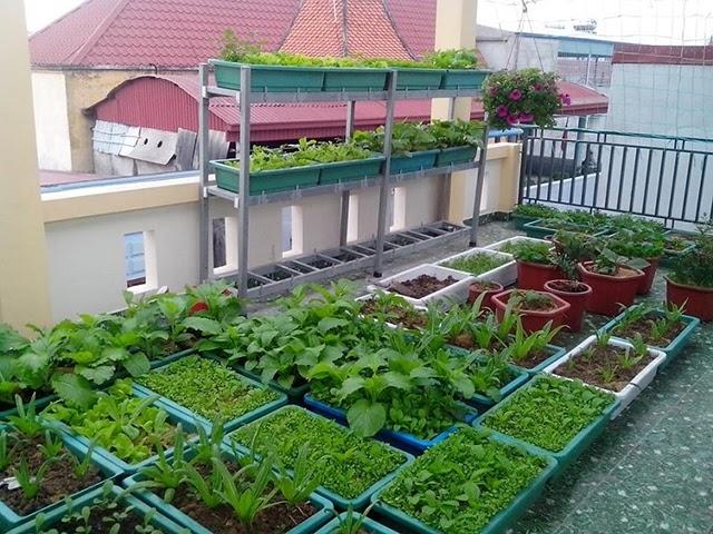 Cách thiết kế vườn rau trên sân thượng đạt hiệu quả cao