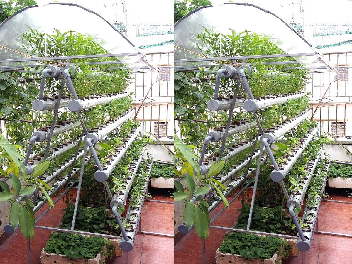 Lựa chọn hạt giống rau phù hợp trồng trên sân thượng
