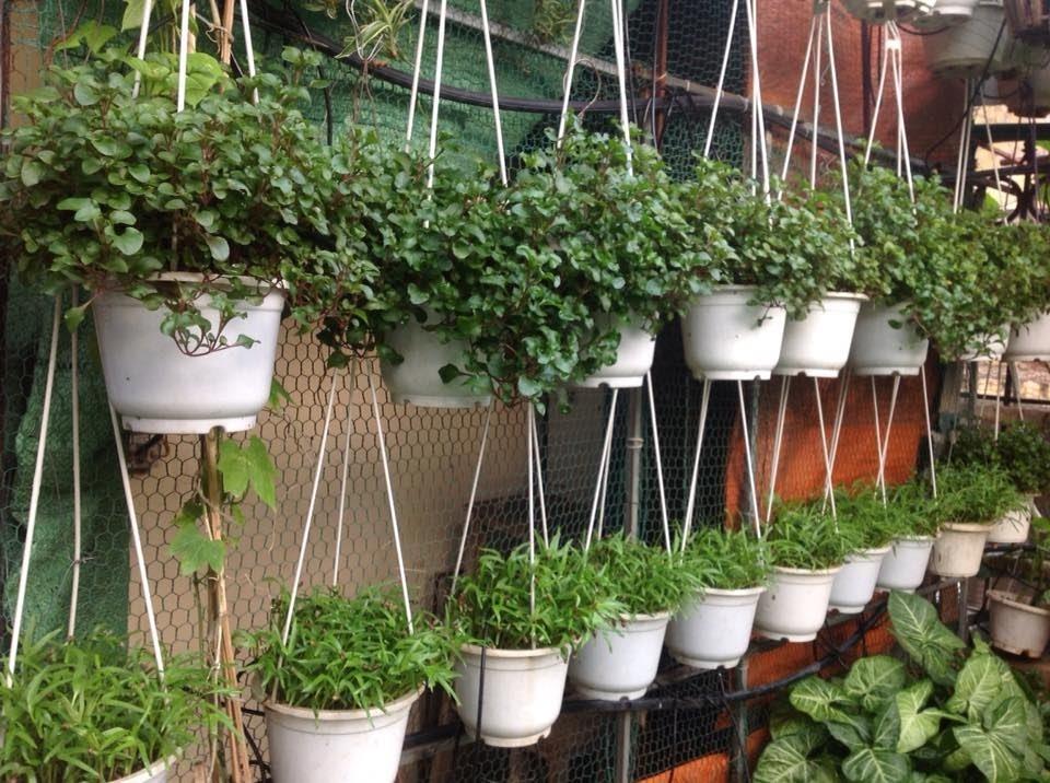 Kinh nghiệm trồng rau trên sân thượng đạt năng suất cao