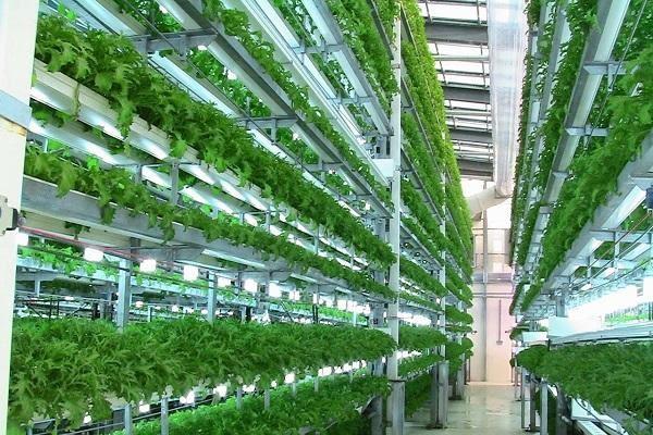 Công nghệ trồng rau sạch tiên tiến từ Israel