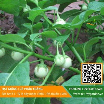 Hat-giong-Ca-phao-trang-My-Garden-hinh-11