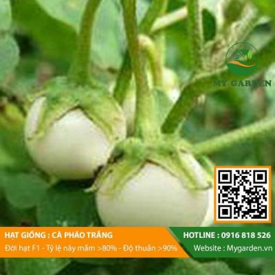 Hat-giong-Ca-phao-trang-My-Garden-hinh-22