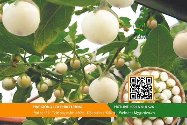 Hat-giong-Ca-phao-trang-My-Garden-hinh-33