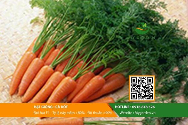Hat-giong-Cu-ca-rot-My-Garden-hinh-44
