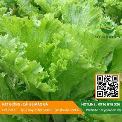 Hat-giong-Cai-be-mao-ga-My-Garden-hinh-22