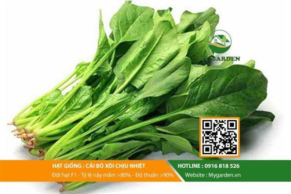 Hat-giong-Cai-bo-xoi-My-Garden-hinh-11