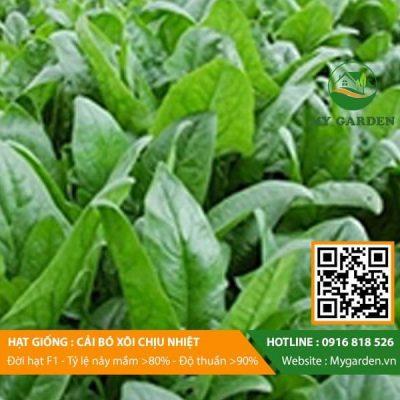 Hat-giong-Cai-bo-xoi-My-Garden-hinh-22