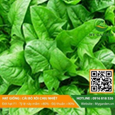 Hat-giong-Cai-bo-xoi-My-Garden-hinh-33