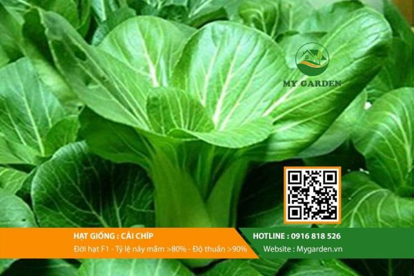 Hat-giong-Cai-chip-My-Garden-hinh-22