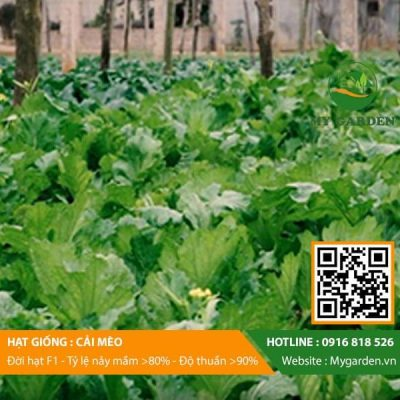 Hat-giong-Cai-meo-My-Garden-hinh-33