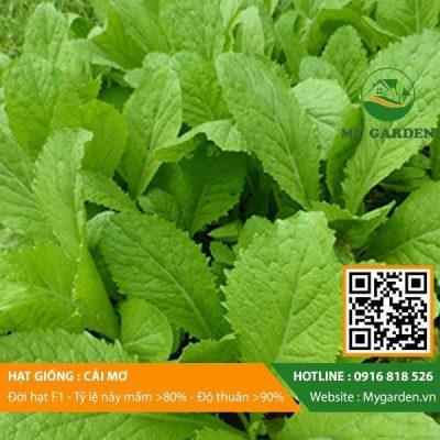 Hat-giong-Cai-mo-My-Garden-hinh-11