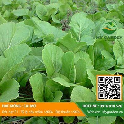 Hat-giong-Cai-mo-My-Garden-hinh-33