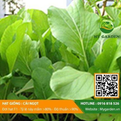 Hat-giong-Cai-ngot-My-Garden-hinh-22