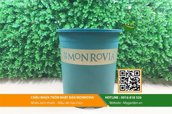 chau-nhua-monrovia-3gl-trong-cay-hinh-3