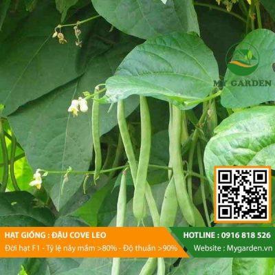 Hat-giong-Dau-cove-My-Garden-hinh-11