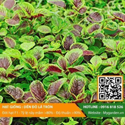 Hat-giong-Den-do-la-tron-My-Garden-hinh-11