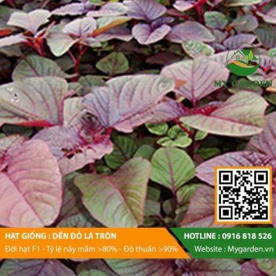 Hat-giong-Den-do-la-tron-My-Garden-hinh-22