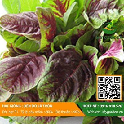 Hat-giong-Den-do-la-tron-My-Garden-hinh-33