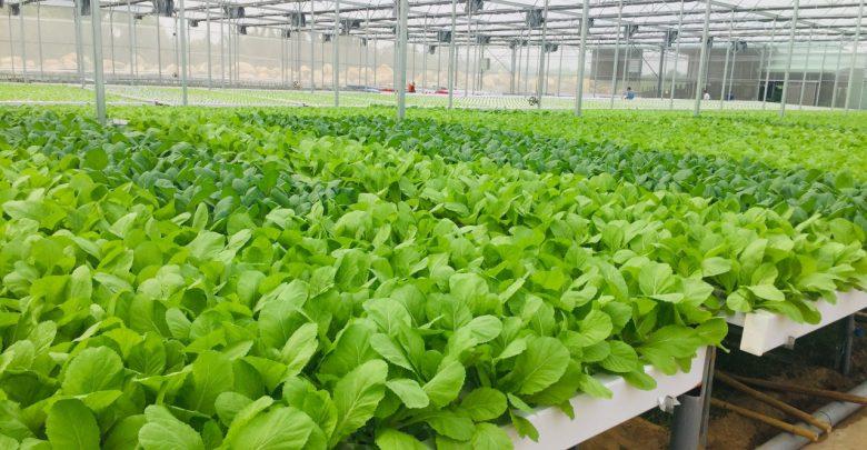 Hệ thống trồng rau sạch vô cùng đảm bảo